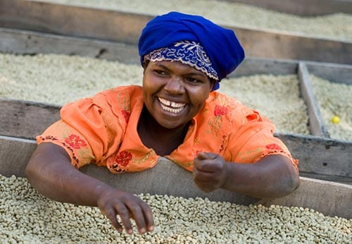 Hållbart kaffe - kvinna med råkaffe i afrika
